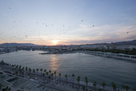 Apartment for sale in Malaga, Spain, 2 bedrooms, 218.00m2, No. 2265 – photo 19